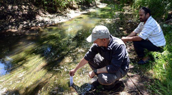 Volvieron los peces a un arroyo que fue contaminado