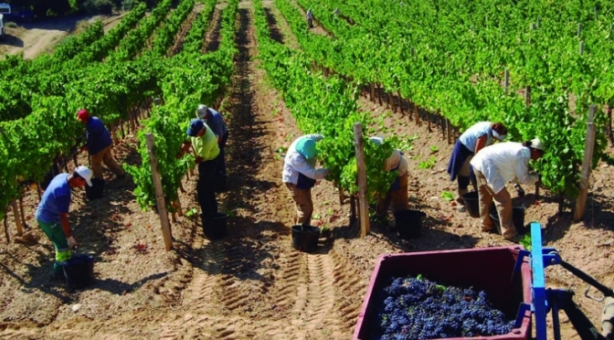Entidades vitivinícolas en pie de guerra