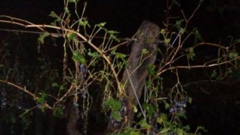 La tormenta que durante las últimas horas del domingo afectó a gran parte del territorio provincial provocó daños en cultivos, principalmente en viñedos de la Zona Este y en el Valle de Uco, informa el diario esteño Extra.