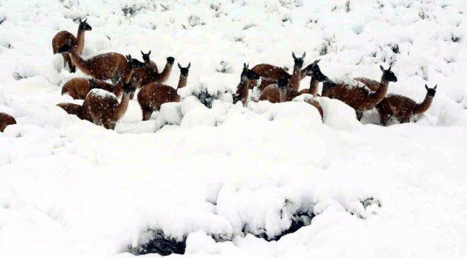 """La nevada """"del siglo"""" en la montaña"""